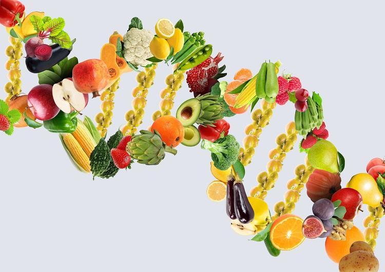 DNA Diet Food Chain